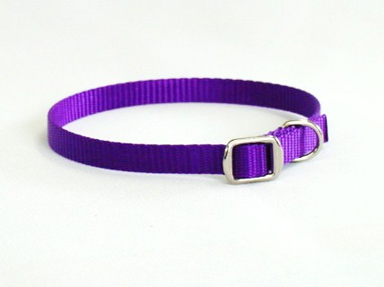 XS Dog Collar With Metal Buckle