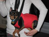 Shoulder Dog Carriers